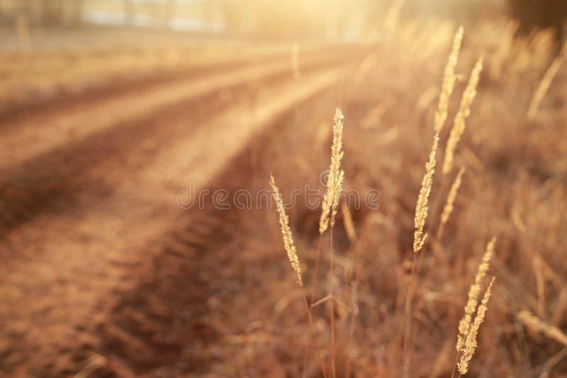 détail de nature d'automne photo stock