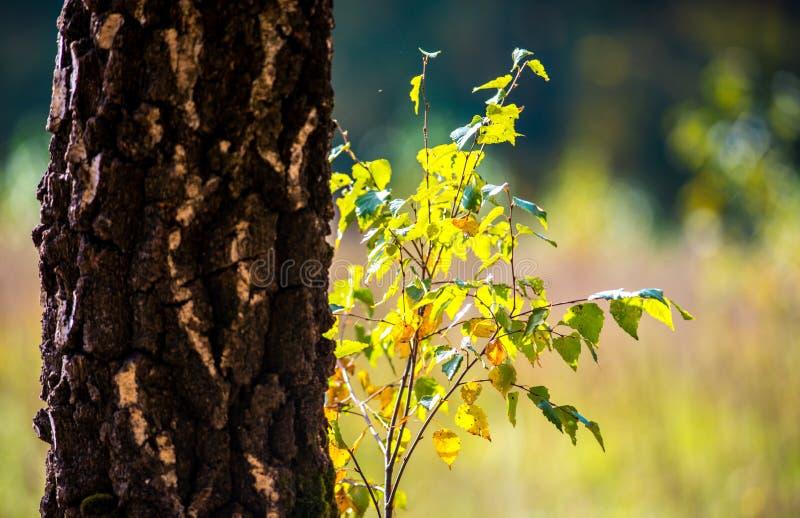détail de nature d'automne photo libre de droits