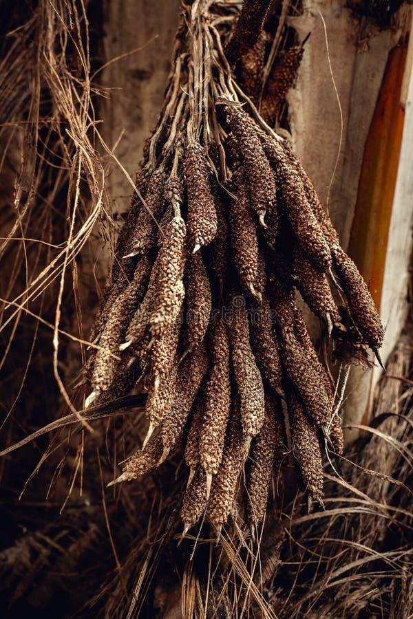 détail de palmier dattier avec la fleur sèche photographie stock libre de droits
