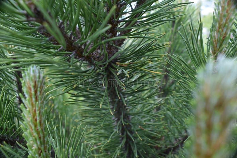Détail de pin photo libre de droits