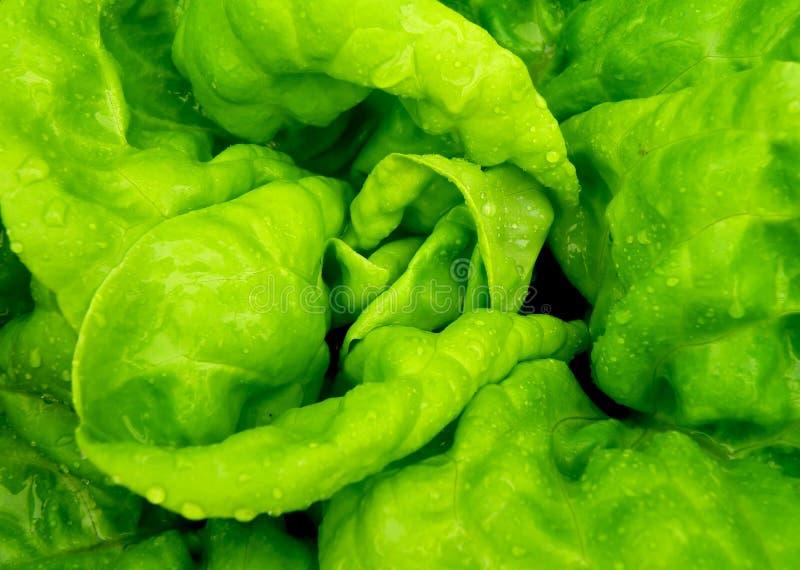 Détail de salade fraîche photographie stock