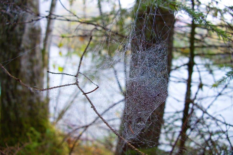 Détail de toile d'araignée avec une rosée de matin images libres de droits