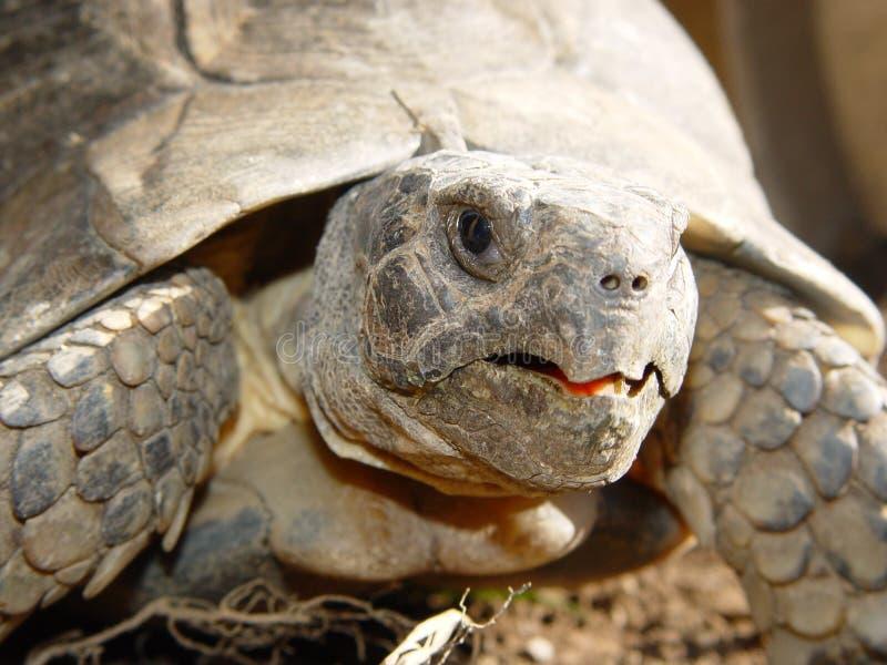 Détail de tortue image stock