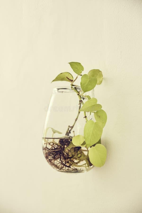 Détail de vase sur le mur photographie stock