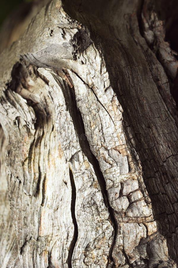Détail de vieux bois cassé photographie stock