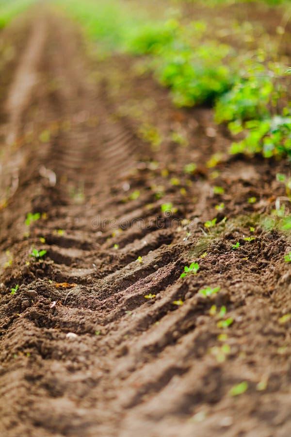 Détail de voie du pneu du tracteur sur le champ pendant le printemps Orientation peu profonde photographie stock