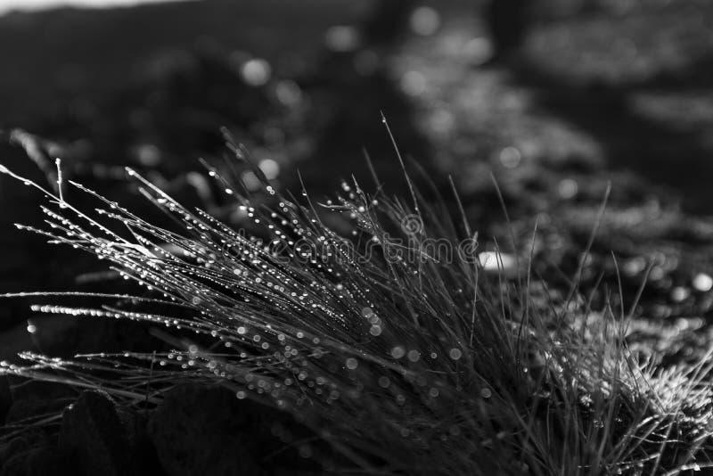 Détail des baisses de rosée sur l'herbe photos libres de droits
