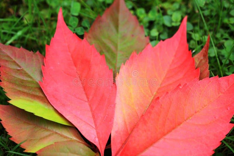 Download Détail Des Feuilles Colorées De Bel Automne Photo stock - Image du arbre, centrale: 45356398