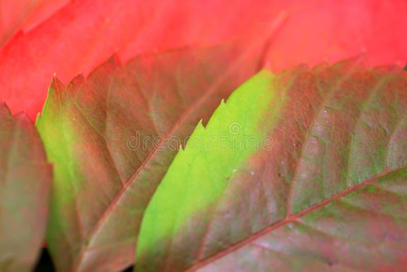 Download Détail Des Feuilles Colorées De Bel Automne Photo stock - Image du nature, beau: 45356588