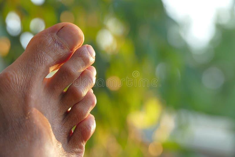 Détail des orteils d'un homme adulte images stock