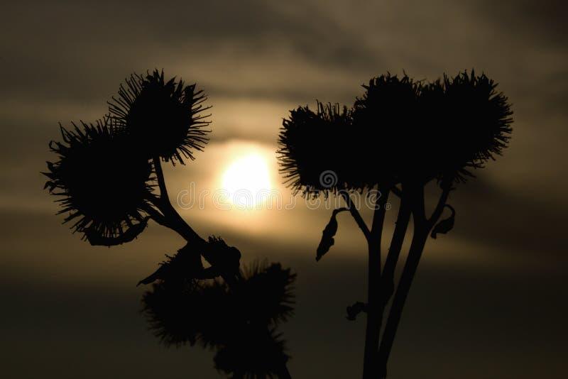 Détail des usines et du coucher du soleil photo stock