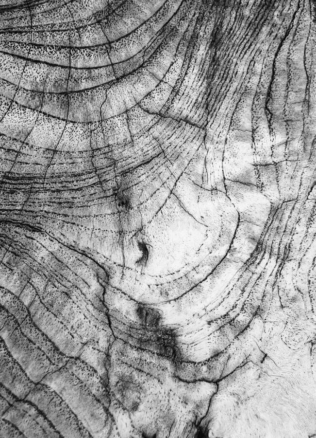 Détail en bois Le vieux bois de construction est localisé à l'extérieur photographie stock libre de droits