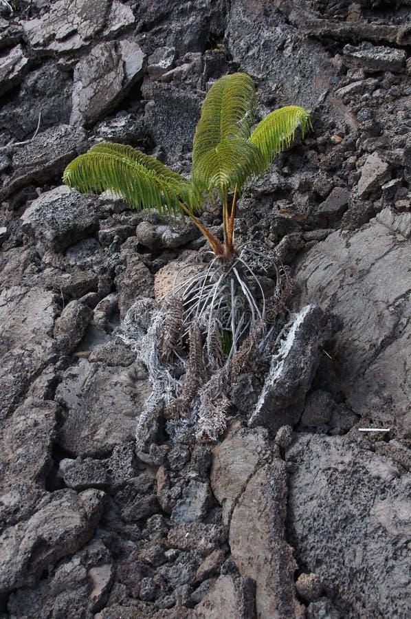 Détail, lave rugueuse d'éruption volcanique antique, image libre de droits
