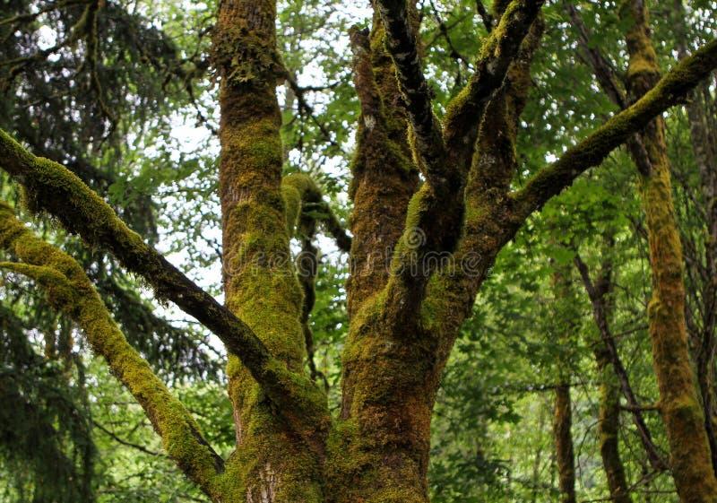 Détail moussu de branches d'arbre photographie stock