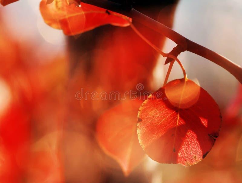 Détails colorés rouges d'automne image stock