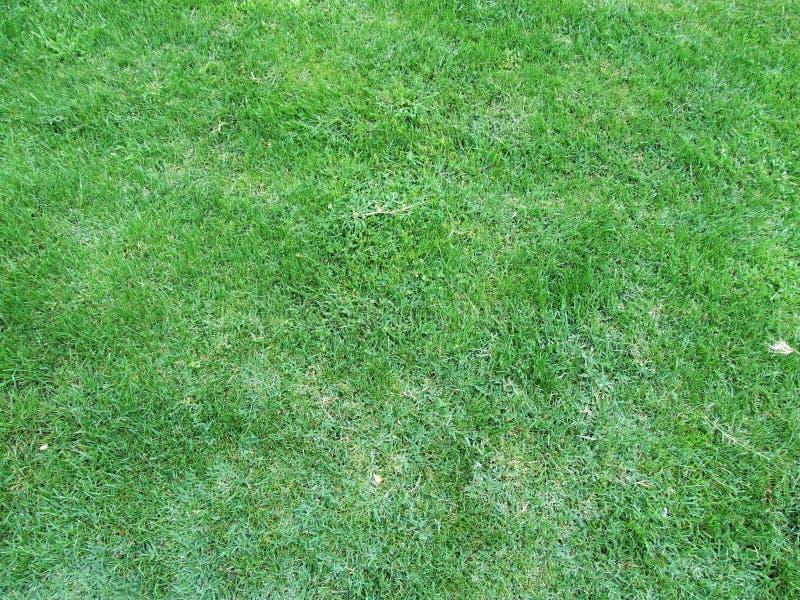 Détails d'herbe verte photo stock