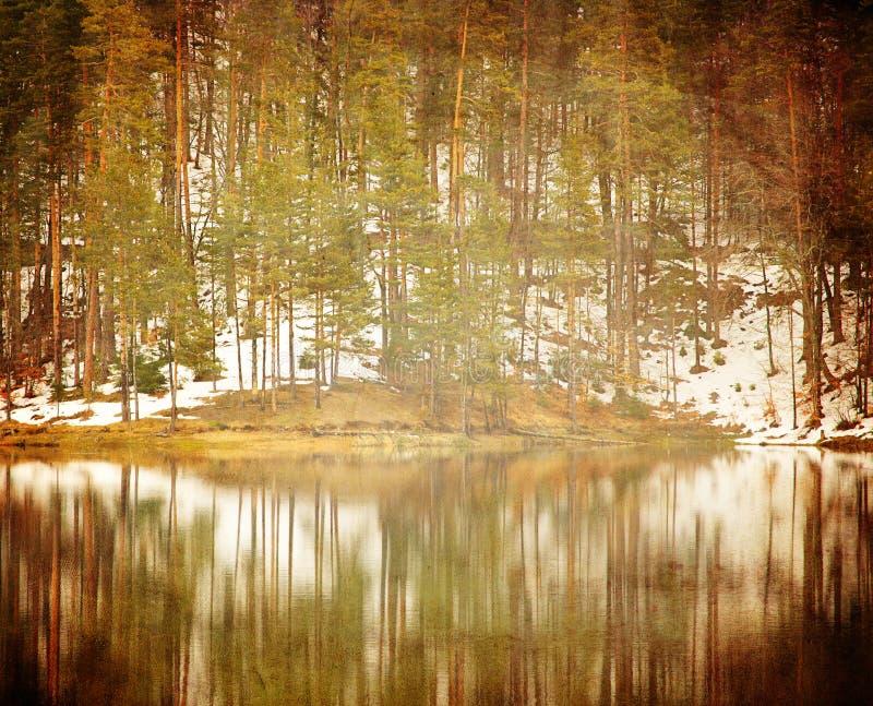 Détails de forêt d'automne photo libre de droits