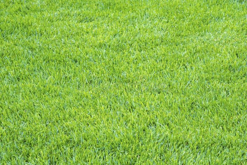 Détails du fond vert clair #1 d'herbe image libre de droits