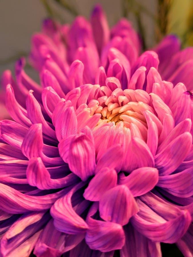 Détails rêveurs de fleur photographie stock libre de droits