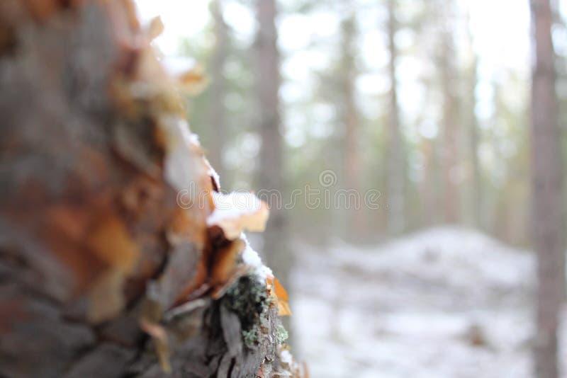 Détruit dans la forêt photos libres de droits