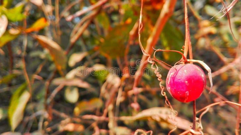 Détruit dans la forêt photographie stock