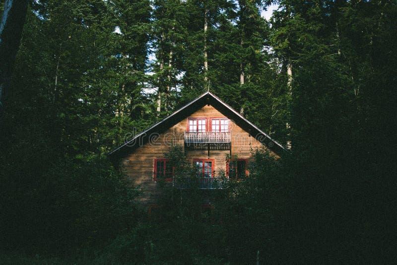 Détruit dans les bois photographie stock