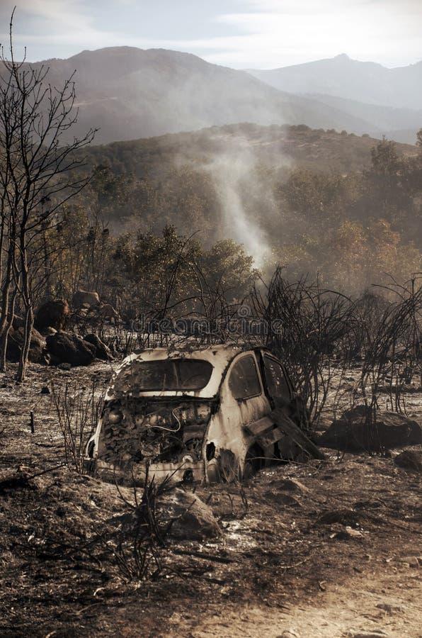Dévastation due au feu d'été photo stock