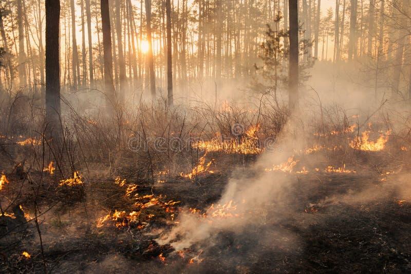 Développement d'incendie de forêt sur le fond de coucher du soleil images stock