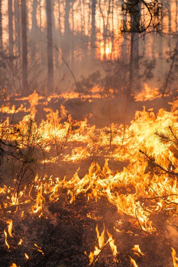 Développement d'incendie de forêt sur le fond de coucher du soleil image stock