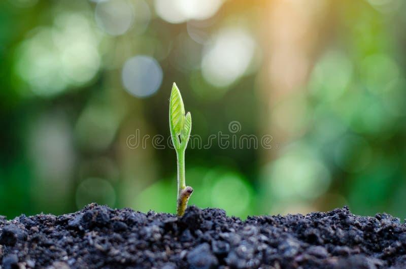 Développement de croissance de jeune plante plantant la jeune usine de jeunes plantes dans le paysage naturel de plantes vertes d photographie stock libre de droits