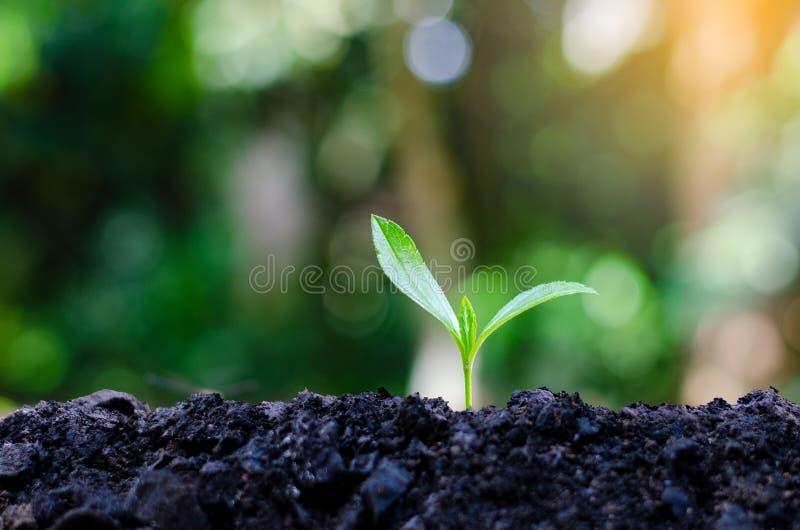 Développement de croissance de jeune plante plantant la jeune usine de jeunes plantes dans le paysage naturel de plantes vertes d photos stock