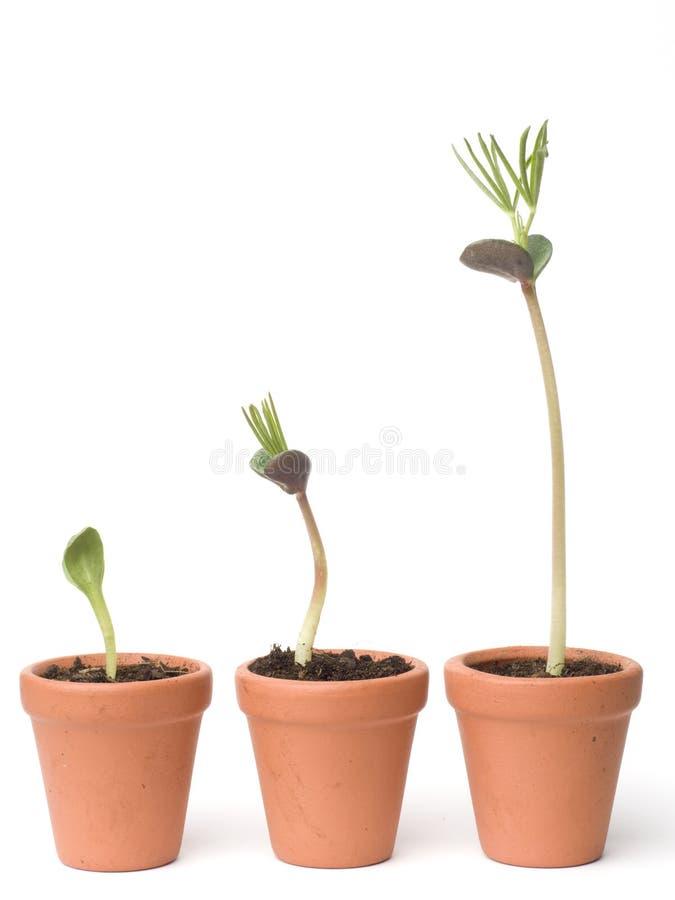 Développement de plante photographie stock