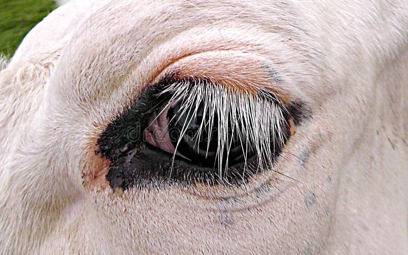 DÉvouement De Public Domain - Digionbew 8 12-06 Juin - 16 Recherches S1440370 D'oeil De Vache Basses Domaine Public Gratuitement Cc0 Image