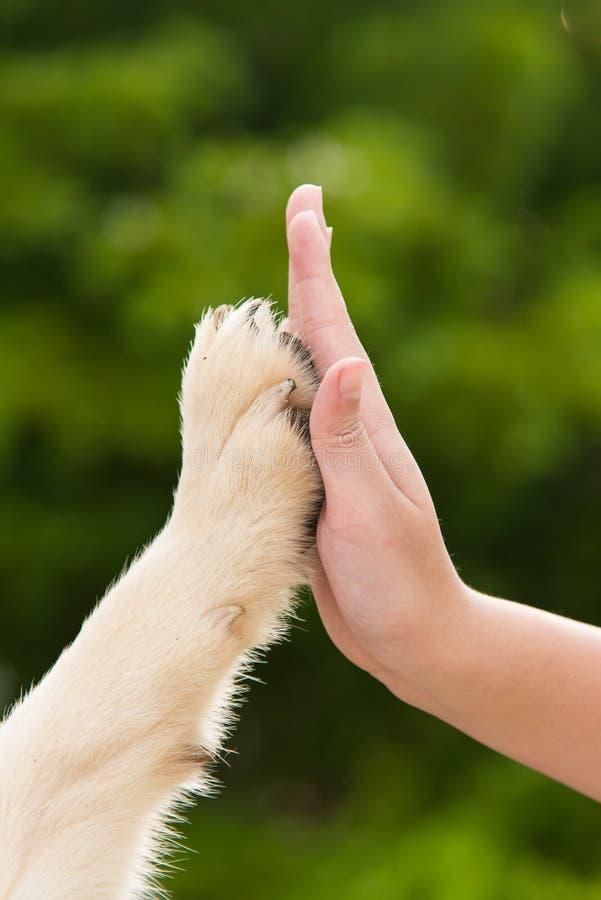 Dê-me cinco - cachorrinho que pressiona sua pata contra uma mão da menina imagens de stock royalty free