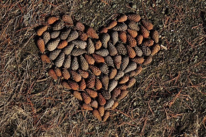 Dê seu coração às florestas fotos de stock royalty free