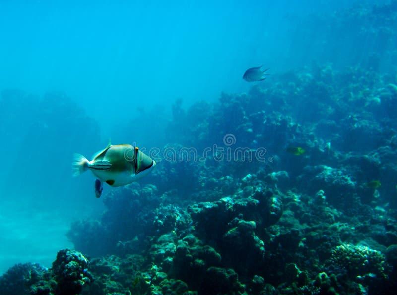 Día agradable bajo el agua fotos de archivo