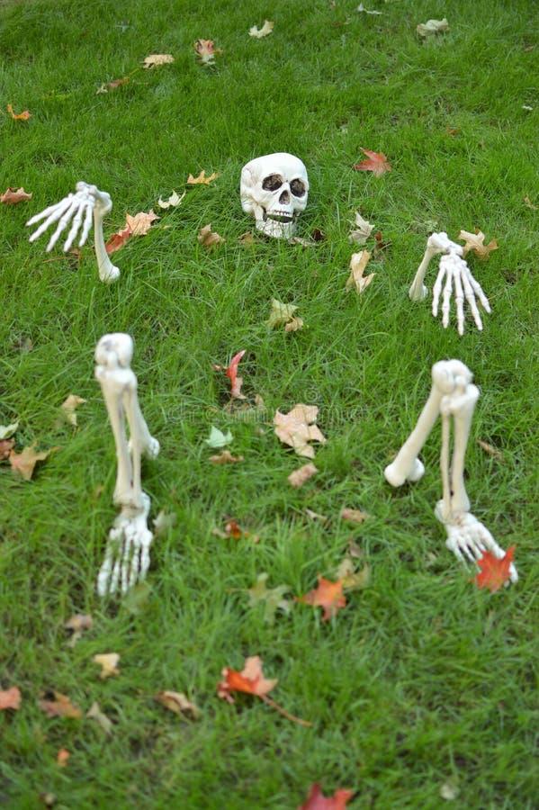 Día de fiesta esquelético asustadizo fantasmagórico de la familia de la diversión del fondo de Halloween imagen de archivo