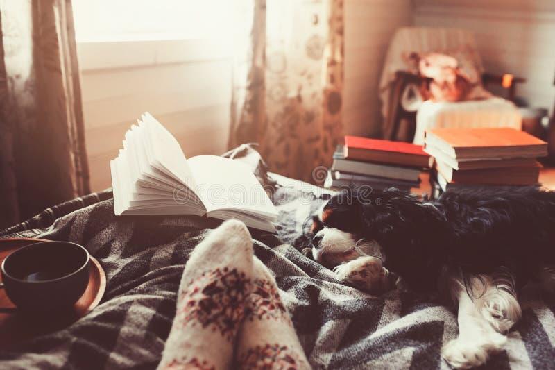 Día de invierno acogedor en casa con la taza de té, de libro y de perro calientes el dormir fotografía de archivo libre de regalías
