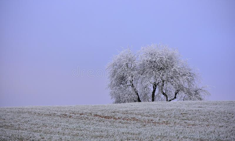 Día de invierno brumoso Paisaje de Lituania foto de archivo libre de regalías