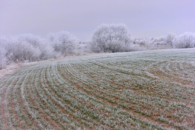 Día de invierno brumoso Paisaje de Lituania fotografía de archivo libre de regalías