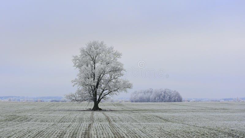 Día de invierno brumoso Paisaje de Lituania imagenes de archivo