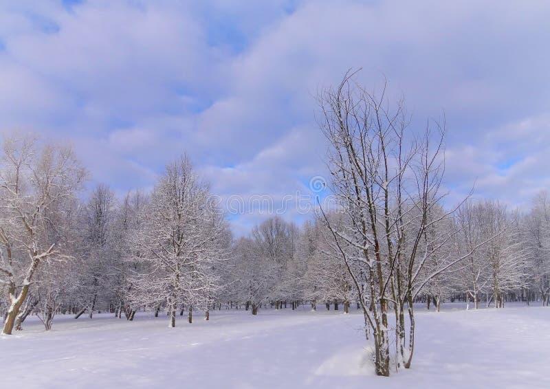 Día de invierno brumoso, soleado en parque de la ciudad imágenes de archivo libres de regalías