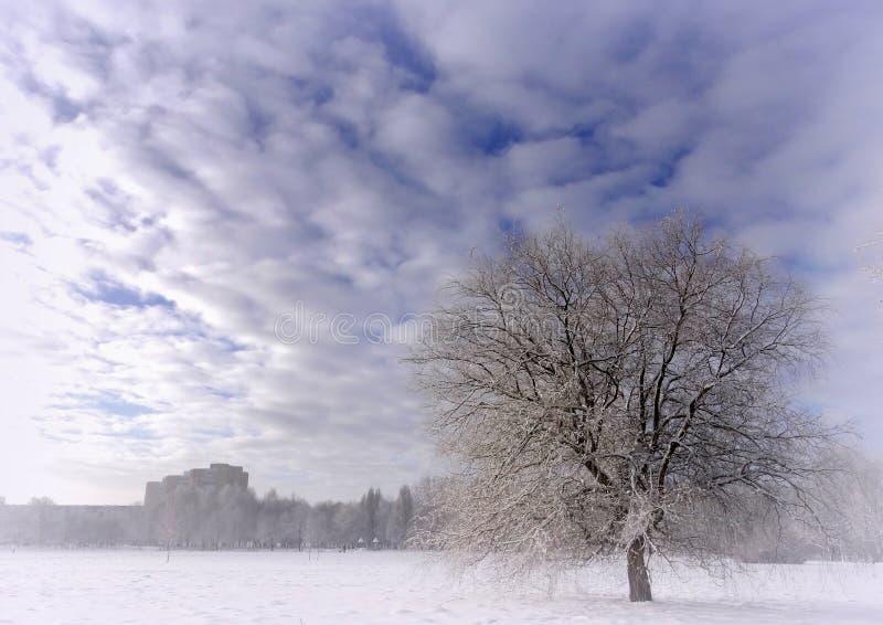 Día de invierno brumoso, soleado en parque de la ciudad fotografía de archivo