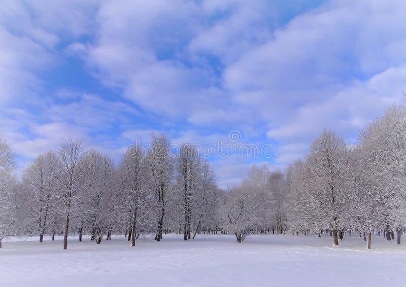 Día de invierno brumoso, soleado en parque de la ciudad imagenes de archivo
