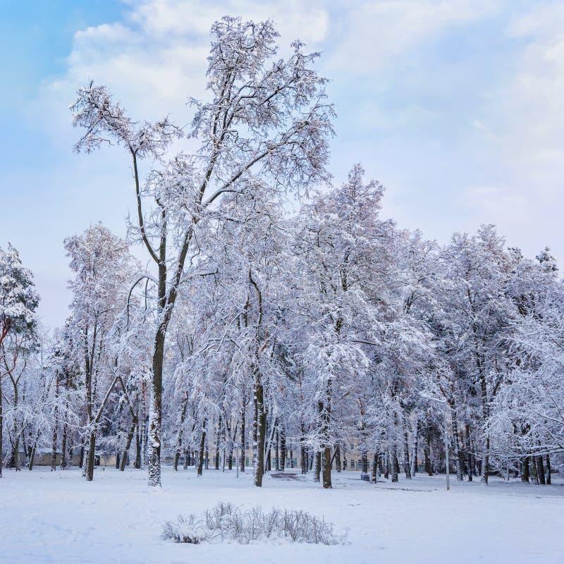 Día de invierno en el parque de la ciudad Los árboles se cubren con nieve fotos de archivo