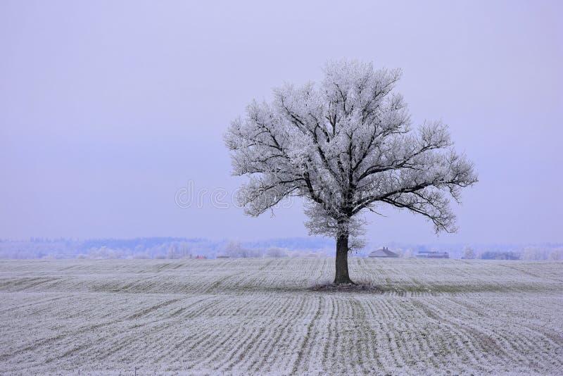 Día de invierno soleado brumoso en Lituania fotografía de archivo