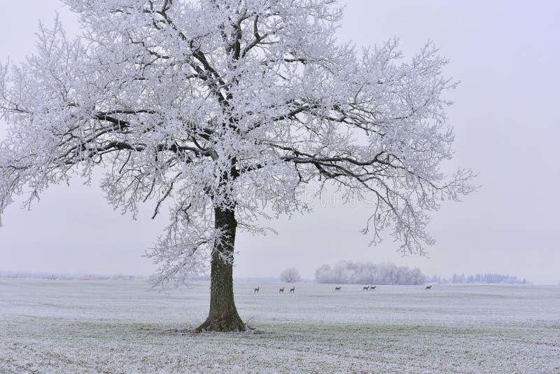 Día de invierno soleado brumoso en Lituania foto de archivo libre de regalías
