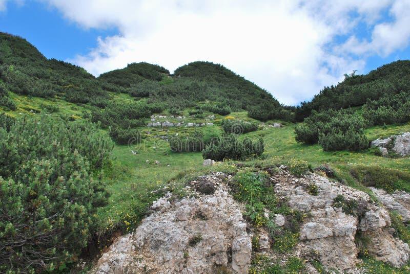 Día de julio altamente en montañas. foto de archivo libre de regalías