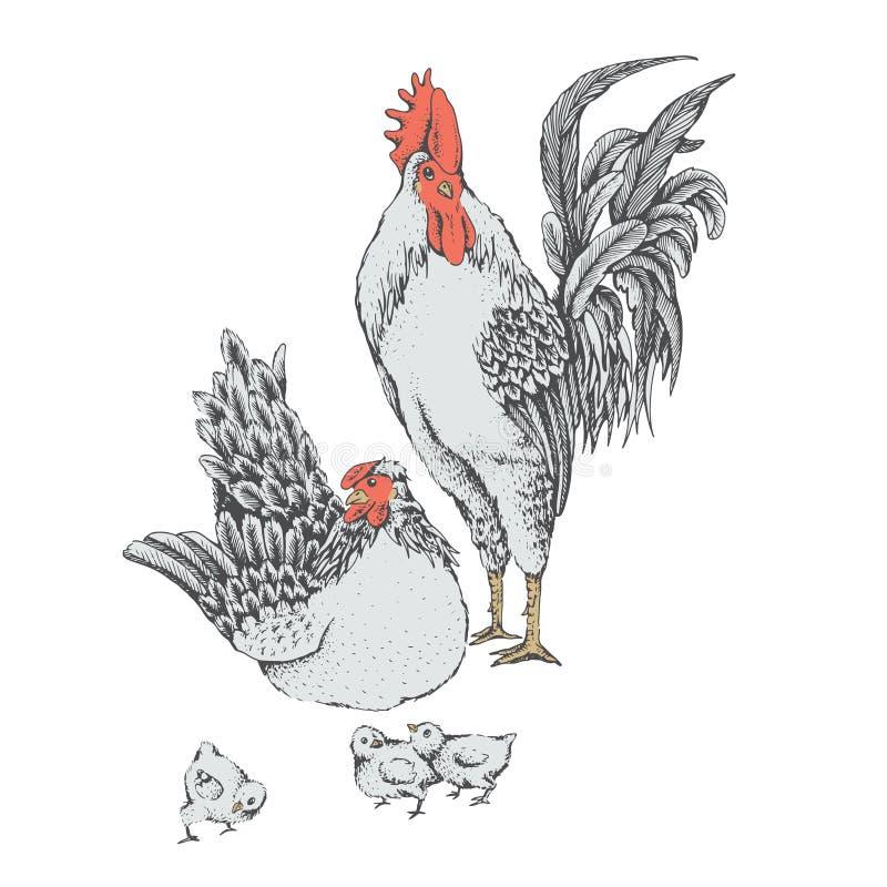 Día de la familia de pájaros del pollo ilustración del vector