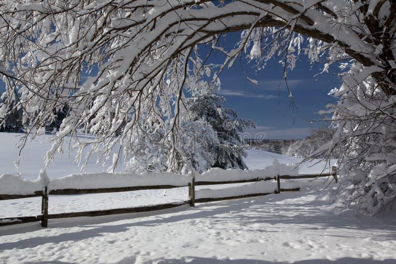 Día de la nieve fotos de archivo libres de regalías